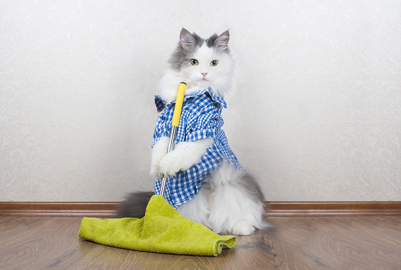 Are Cats Less Expensive Than Dogs